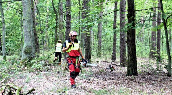Imagen de labores de conservación en un bosque.