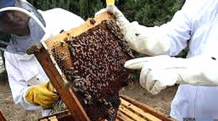 Foto 1 - Agricultura y Ganadería destinará ayudas para la producción y comercialización de la miel elaborada en CyL