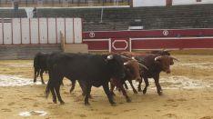 Los astados en La Chata. SN