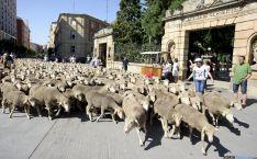 Las ovejas atravesando Mariano Granados el pasado año. /SN