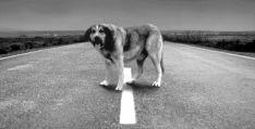 Un perro abandonado en una carretera.