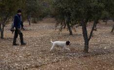 Finca trufera en Soria