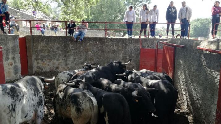 Foto 1 - Los Jurados hacen su porra para La Saca