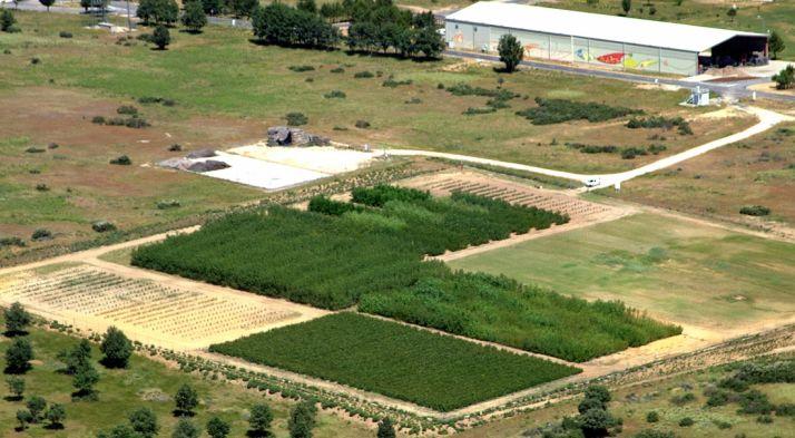 Plantaciones para biomasa en el Céder.