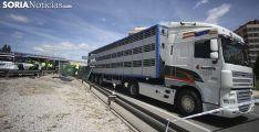 Un momento del embarque de los cerdos a otro vehículo./SN