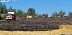 Un campo de cereal pasto de las llamas./SN