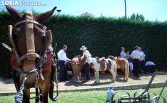 Imagen del mercado tradicional de Almarza./SN