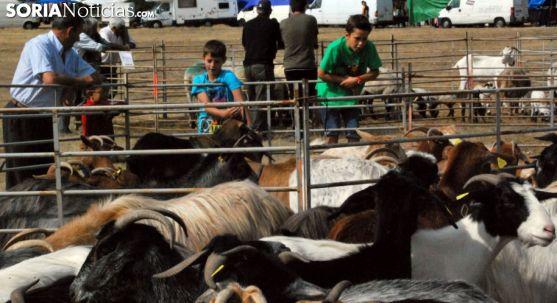 Una feria de ganado en Pinares./SN