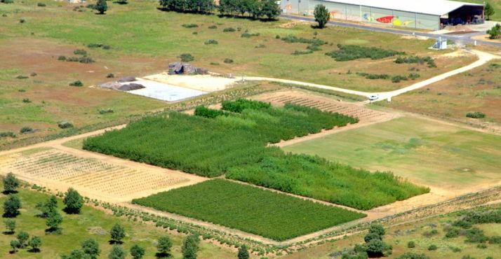 Parcelas de cultivo para biomasa en el centro de investigación.