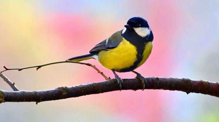 La ornitología, valor turístico.