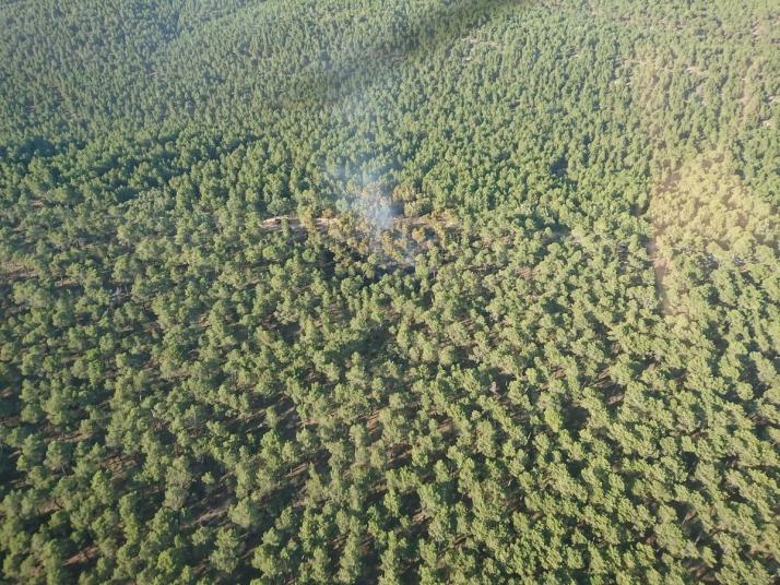 Foto 1 - Arde media hectárea de pinar en Almazán