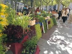 Celebrado el XXIII mercado ecológico en la capital
