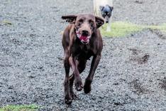 Foto 6 - 4 años cumpliendo el sueño de cuidar de los perros 24 horas al día