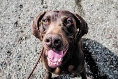 Foto 5 - 4 años cumpliendo el sueño de cuidar de los perros 24 horas al día