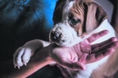 Foto 4 - 4 años cumpliendo el sueño de cuidar de los perros 24 horas al día
