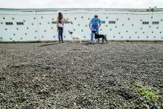 Foto 3 - 4 años cumpliendo el sueño de cuidar de los perros 24 horas al día