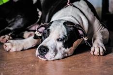 4 años cumpliendo el sueño de cuidar de los perros 24 horas al día