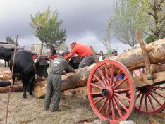 Carrreta de pinos junto a una vaca serrana soriana.