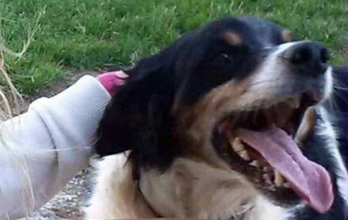 'Rocky', uno de los dos perros.