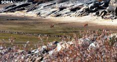 Foto 4 - GALERÍA: El pantano, un monumento a la sequía