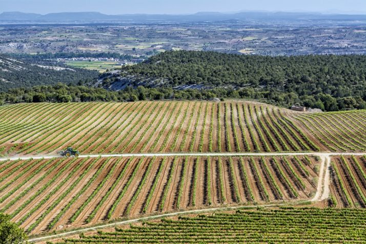 'Camino a la viña', Accésit.
