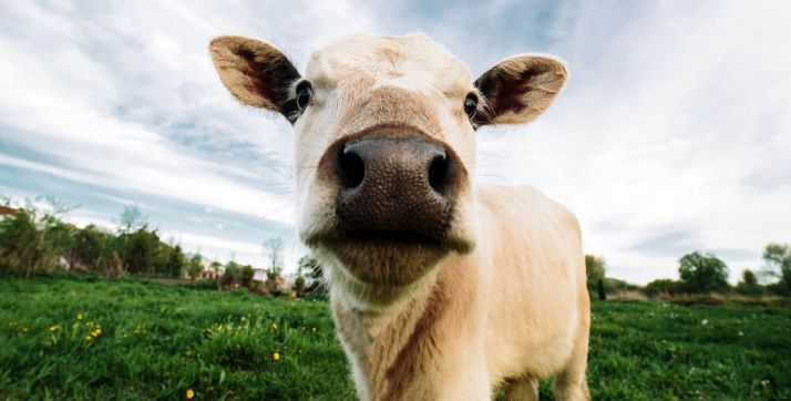 Foto 1 - La provincia, libre de brucelosis bovina según la UE