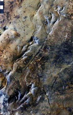 Foto 2 - Buscando dinosaurios en Soria