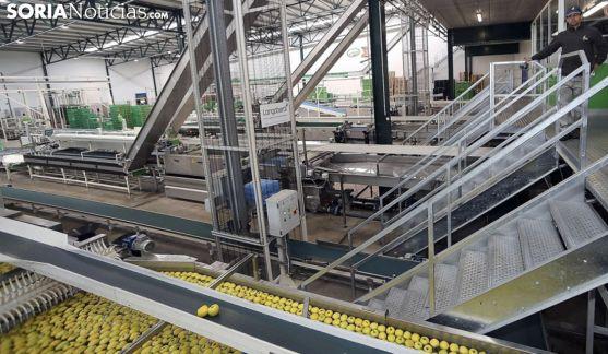 Las instalaciones de Nufri, en La Rasa. /SN