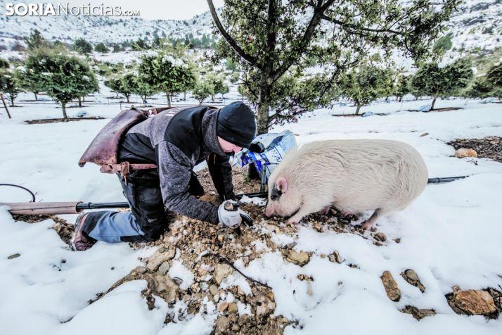 Javier López y Bulla, mano a pezuña, forman el equipo perfecto para la recolección trufera. Carmen de Vicente.