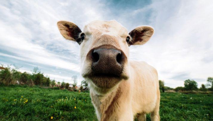 Foto 1 - 2,5 M€ en ayudas para fortalecer el sector agrícola y ganadero en la cadena alimentaria