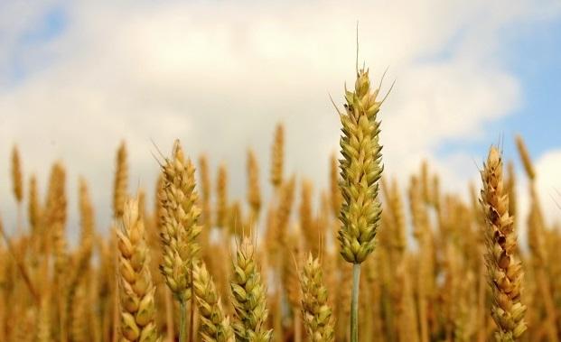 Foto 1 - 17.300 controles garantizan la seguridad de los cultivos agrícolas