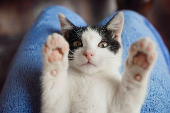 Foto 1 - 10.000€ para la esterilización de gatos callejeros en Soria