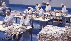 Factoría de Bacalao Dimar en Ágreda. /BD