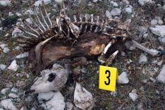 Uno de los cadáveres encontrados por el Seprona. /Subdeleg.