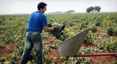 Joven agricultor en la zona de La Ribera. Foto: eleconomista.es