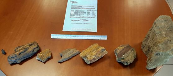 Los fósiles donados. /Jta.