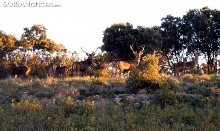 Un grupo de ciervos en un coto de la provincia. /SN