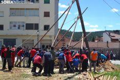 En Navaleno son los propios jóvenes quienes arrastran el pino desde el monte.