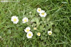 La primavera llega a la Dehesa.