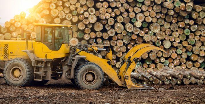 Foto 1 - Los aprovechamientos maderables dejan más de 1 M€ en las arcas municipales de la capital