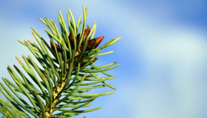 Cesefor organiza el I Foro de Bioeconomía Forestal