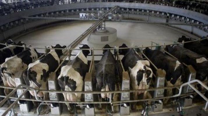 Foto 1 - UPA insiste en su rechazo a las macrogranjas de vacas