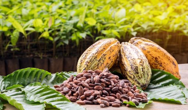 Foto 1 - El cacao natural, muy apto para niños y jóvenes