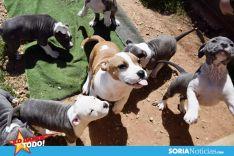 Foto 2 - Como en tu casa: Vocación por los animales en Soria