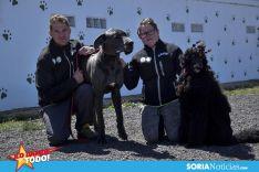 Como en tu casa: Vocación por los animales en Soria