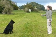 Curso de educación canina en Soria