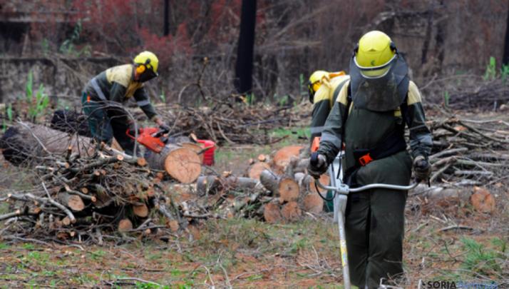 Brigadas Forestales de la Diputación de Soria