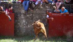 Uno de los toros antes de salir a Cañada Honda. /SN