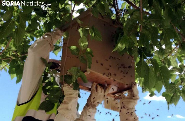 Las abejas también se rebelan en Ólvega
