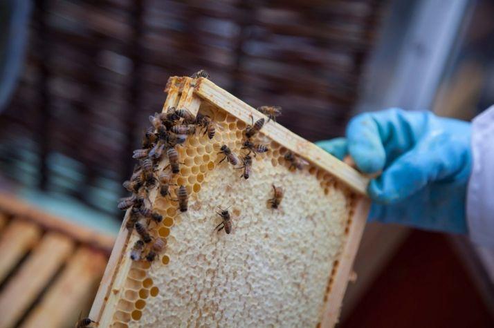 Foto 1 - 1,6 millones en ayudas a la miel de la región